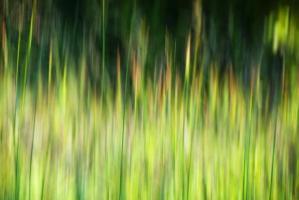 4-grassland-iris-greenwell