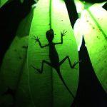2012-இன் சிறந்த இயற்கைப் படங்கள்