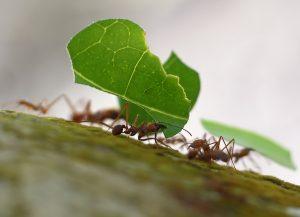 leafcutter_closeup
