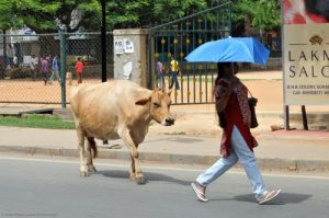 People_Walk_BLR_Karnataka