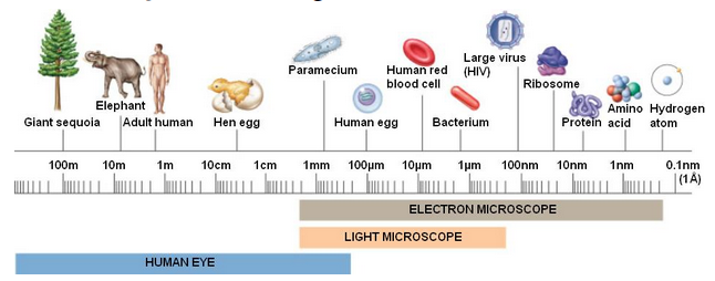 Human_Eye_Electron_Microscope_Zoom_Visible_Cell_Size_Shapes_Visual_See_Infographics