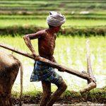 அலகுடை நீலழவர் - பெருமாள் முருகனின் 'ஆளண்டாப் பட்சி'