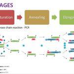 தடயவியல் விஞ்ஞானம் - பாலிமரேஸ் செயின் ரியாக்ஸன் (PCR)